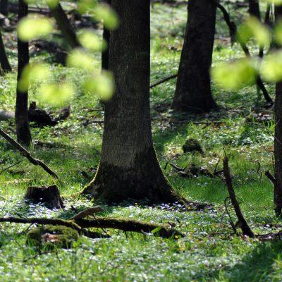 Im Gutswald von Gut Pronstorf